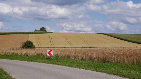 Bild des Monats - August 2017, Kulturlandschaft mit Mais, Weizen, Dinkel, Juli 2017