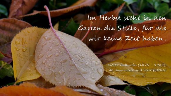 Gefallene Blätter mit einem Zitat...