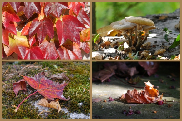 Herbst, goldener Oktober, am Bodensee, 2017