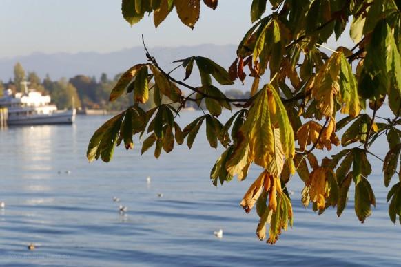 Herbstlaub und Dampfer - am Bodensee, Oktober 2017