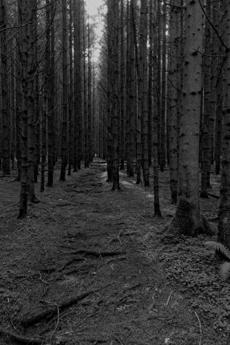 Wald, Bildbearbeitung in DXO, 2017
