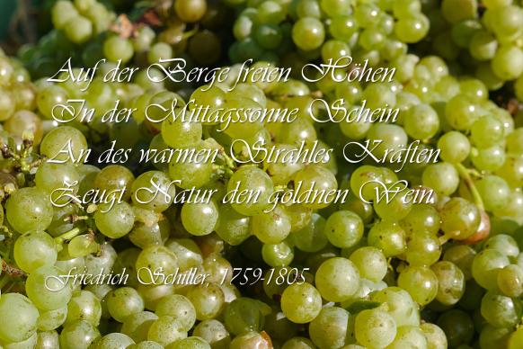 Weinlese und Zitat, Schiller, Wein