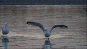 An der See, Möwen am Ufer...