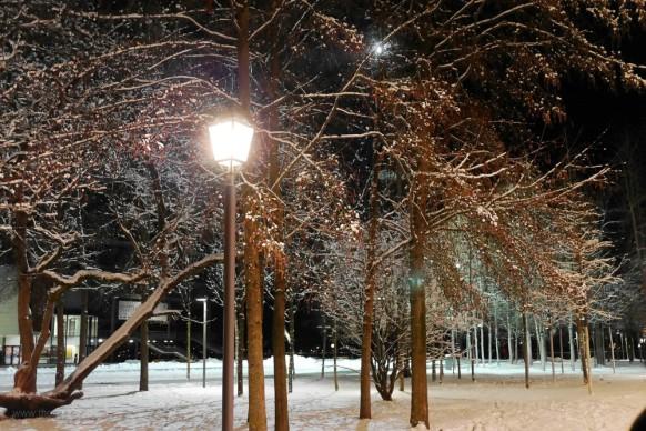 Verschneite Laubbäume, Dezember  2017