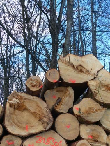 Laubwald und geschlagene Bäume, 2018