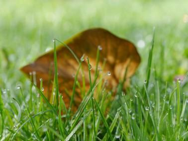 Tau auf dem Rasen, ein blatt im Hintergrund...