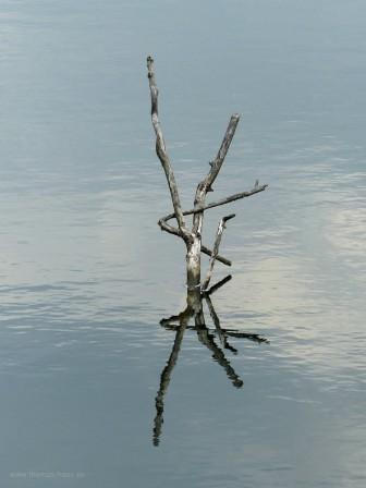 Nature Art - Holz im See