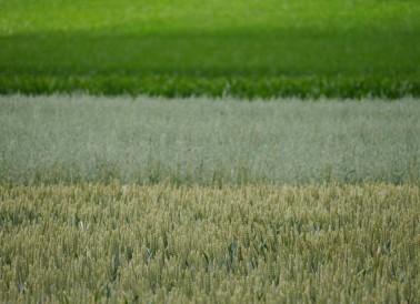 Landwirtschaft, Roggenburg, Juni 2018