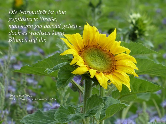 Sonnenblume, Zitat van Gogh, 2018