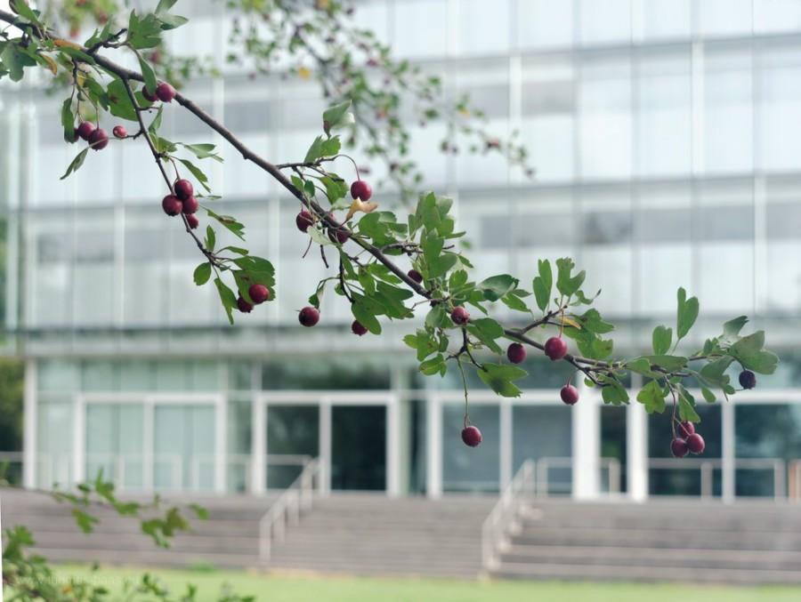 Fassade der Zeppelin-Universität vom Seeufer