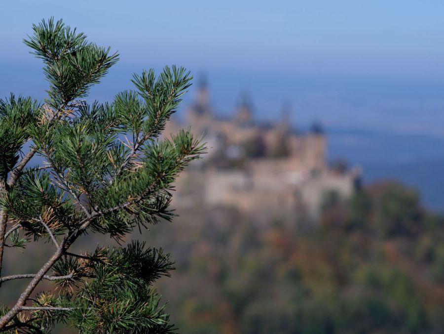 Hintergrund: Burg Hohenzollern, Yannick Musch