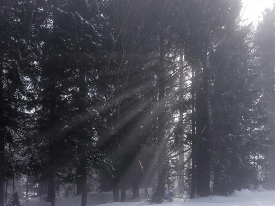 Sonnenstrahlen im Winterwald...