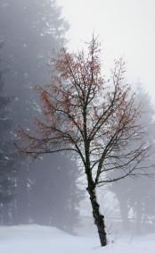 Winterbaum, Landschaft