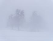 Bäume verschwinden im Nebel...