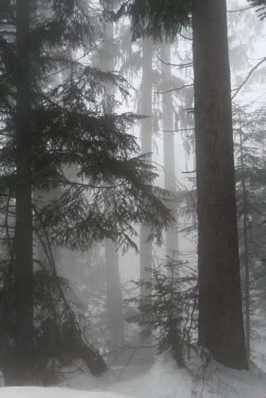 Mystischer Mpment, Wald im Nebel, Februar 2019