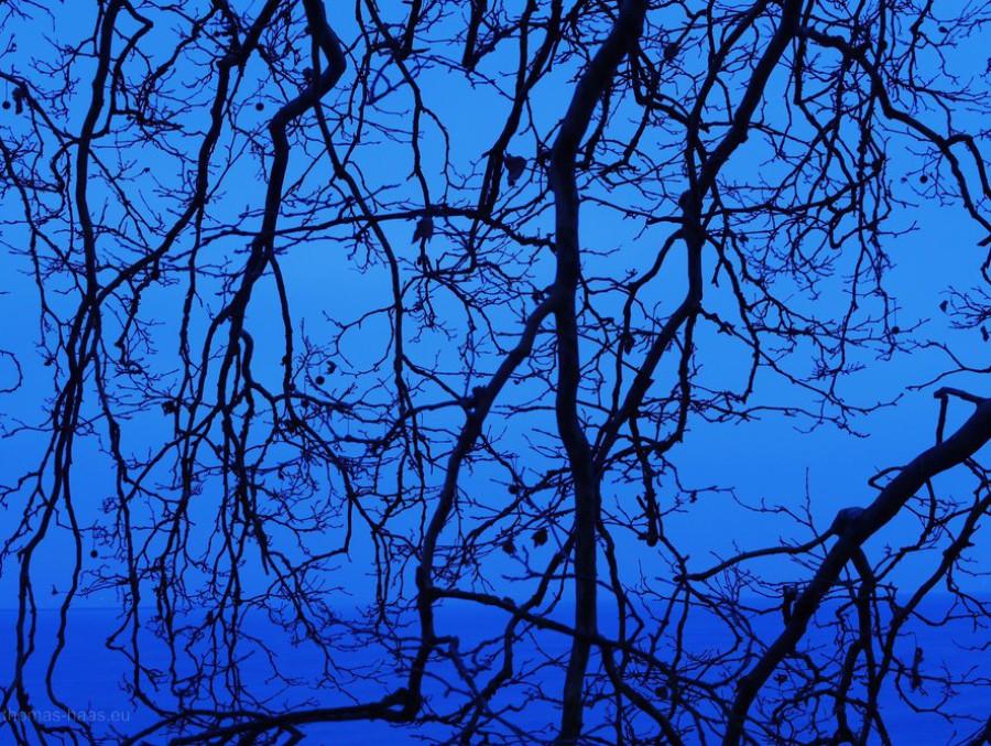Blick auf den Bodensee mit Übertreibung der blauen Stunde...