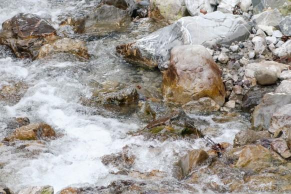 Trettach, einer der Quellflüsse der Iller, 2019