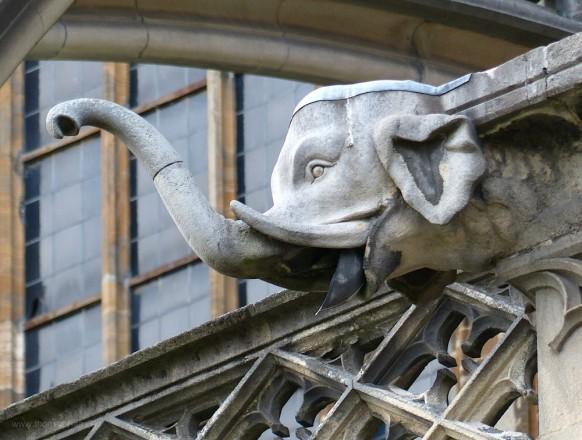 Elefant, Wasserspeier, südl. Münsterplatz, 2019
