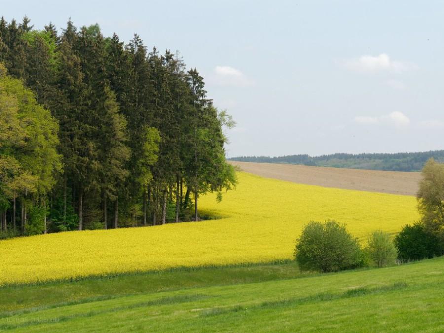 Felder, Acker, Wiese & Wald, Mai 2019