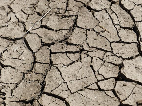Trockener, aufgerissener Boden, Juli 2019