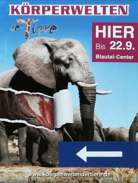 Bis 22.09. 2019 in Ulm, Körperwelten der Tiere!