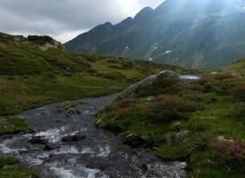 Rinnsal aus dem Brettersee in Alpenflora, 2019