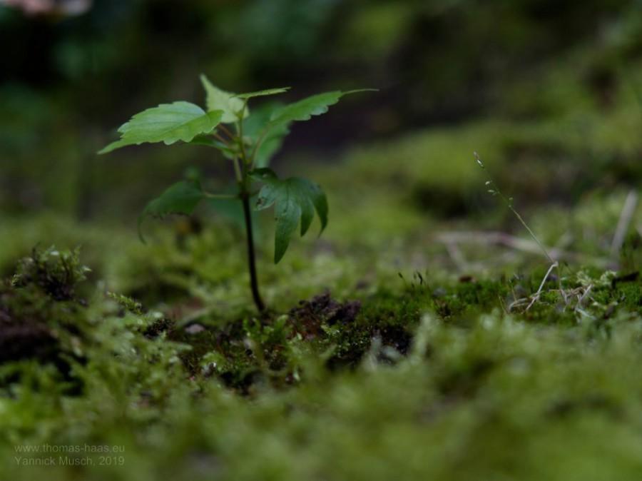 Ein Bäumchen will wachsen... Yannick Musch, 2019