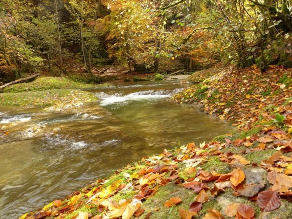 Wasser und Landschaft, Eistobel, Oktober 2019