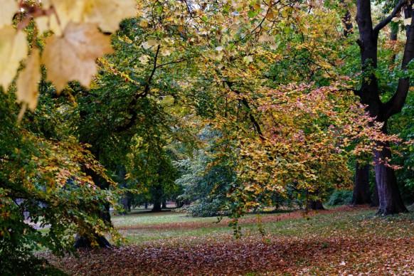Oktober 2019 - Herbst in Ulm, Ehinger Anlagen