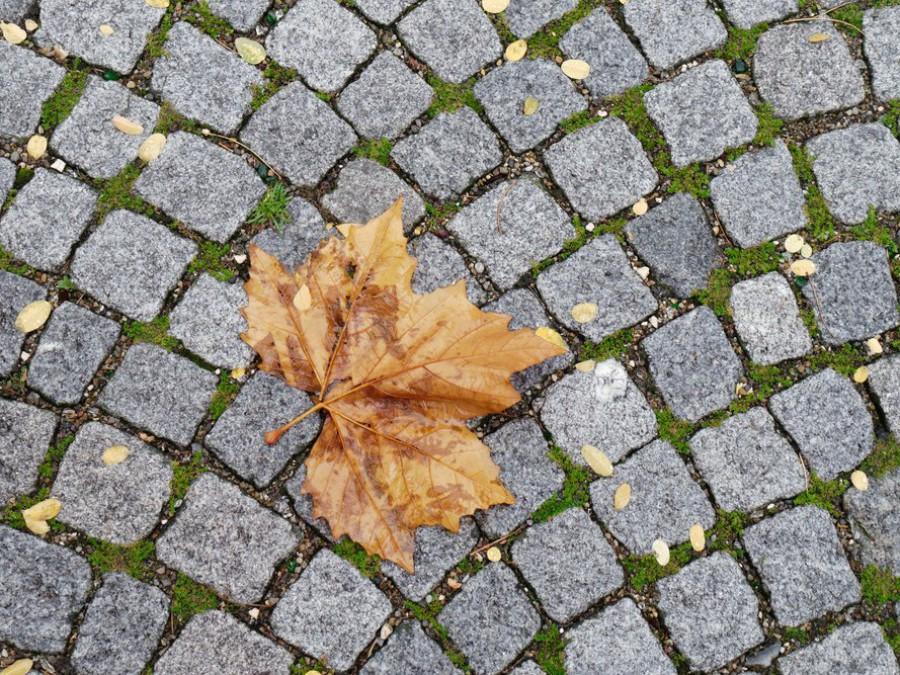 Ahornblatt und Pflastersteine, Herbstgrafik, 2019
