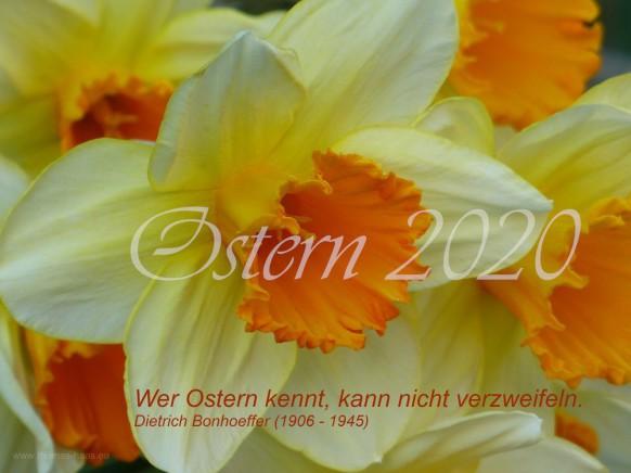 Narzissen mit Ostergruß, 2020