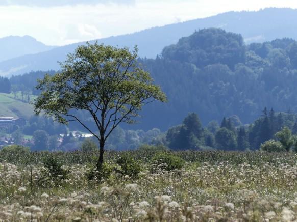 Alleinstehender Baum nahe dem Teufelssee, 2020