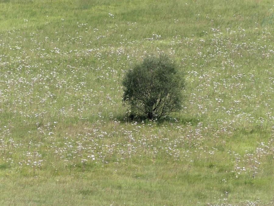 Baum im Ried, 2020