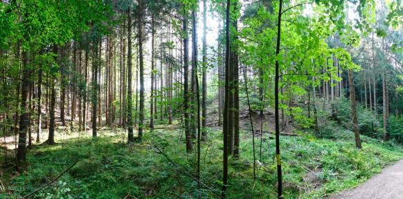 Panorama im Wald, 2020