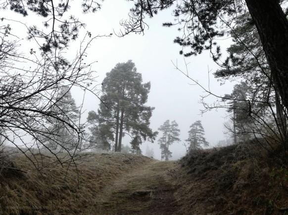 Wental bei Nebel und Bodenfrost, mystische Landschaft im Dezember 2020