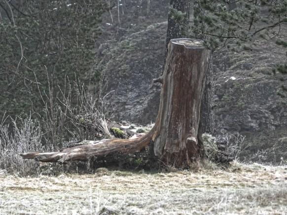 Baumstumpf in Nebellandschaft, Dezember 2020