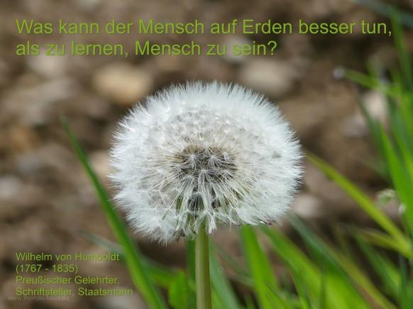 Löwenzahn, Pusteblume, Bordsteinorchidee - und ein passendes Zitat...