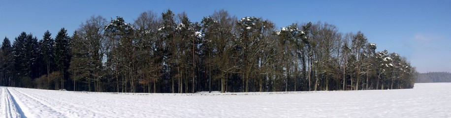 Panorama Waldrand im Winter