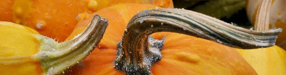 Zierkürbisse - der Herbst ist da!
