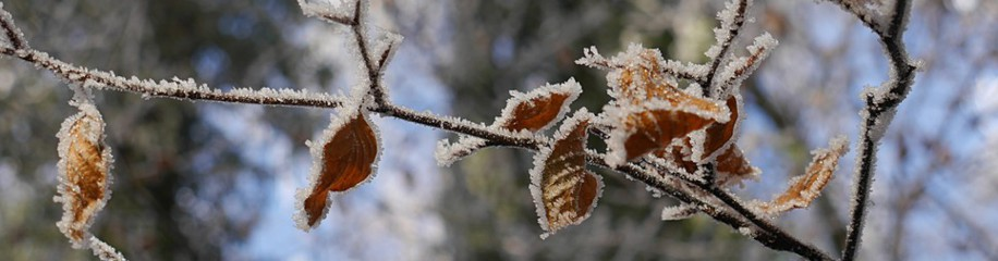 Winterbilder aus Bellenberg