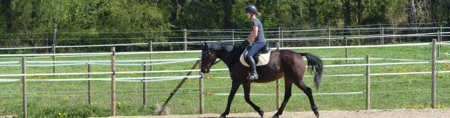 Ein Pferd, ein Pferd, ein Königreich für ein Pferd...