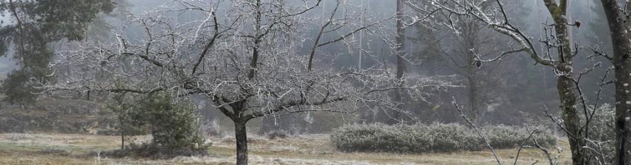 Frost im Wental, Dezember 2020